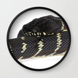 Boelen's Python, Draven. Wall Clock