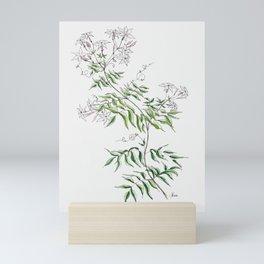 Jasmine Flower Illustration Mini Art Print