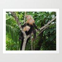 Costa Rican Monkeys in the Wild Art Print