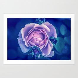 Rose Explanation Art Print