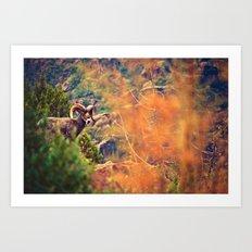 Bighorn Art Print
