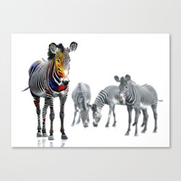 Stand Out Zebra Canvas Print