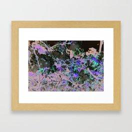 Orchid tree Framed Art Print