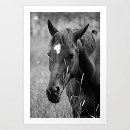 Horse Portrait - BW Art Print