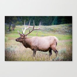Yellowstone Canvas Print