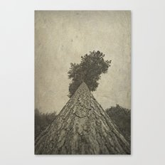 Beautiful bark Canvas Print