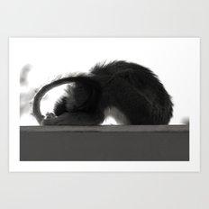 Yoga Monkey Art Print