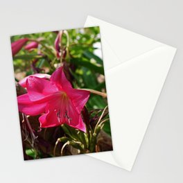 The Liberation Stationery Cards