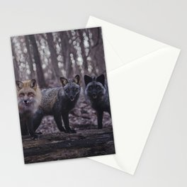 Red Fox (Vulpes vulpes) Color Phases Stationery Cards