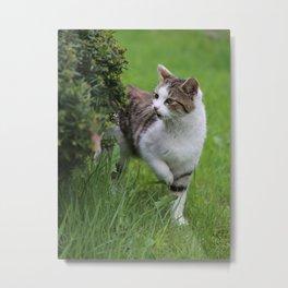 house cats Metal Print