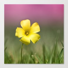 Yellow on Pink Canvas Print