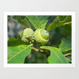 Green Acorns Art Print