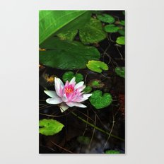 Water Lily 1 Canvas Print