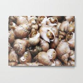 texture of sea snails Metal Print