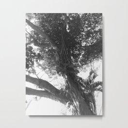 Arbor Fronde Metal Print