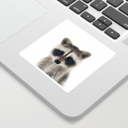 Baby Racoon Sticker