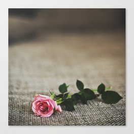 LAST ROSE. Canvas Print