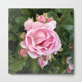 Rose 8 Metal Print