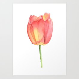 Red And Yellow Single Tulip In Watercolor Art Print
