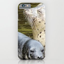 Harbor Seal Sweetness iPhone Case