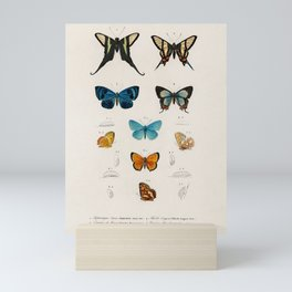 Butterfly collection Mini Art Print