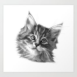 Maine Coon kitten G114 Art Print