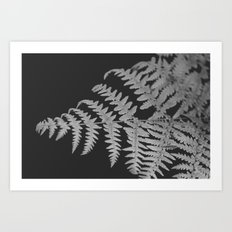 Black and White Botanical Art Print