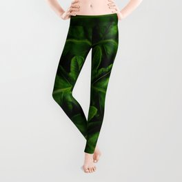 Close Up Of A Green Fern Leaf Intricate Patterns In Nature Against A Black Background Leggings