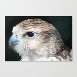 Saker Falcon 1 Canvas Print