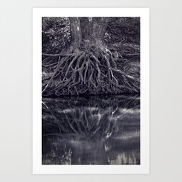 Clinging to the River Bank Art Print