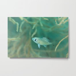 Curious & gentle little fish Metal Print