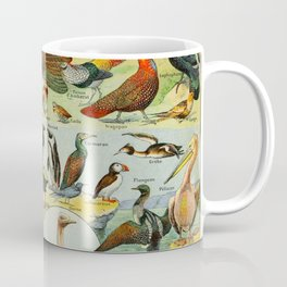 Colourful Birds Vintage Scientific Illustration French Language Encyclopedia Lithographs Educational Coffee Mug