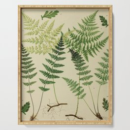 Botanical Ferns Serving Tray