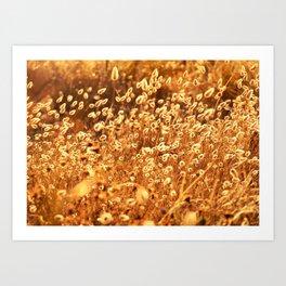 Golden bunny tails Art Print
