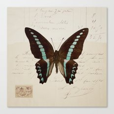 blue spotted butterfly Canvas Print