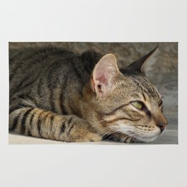 Thoughtful Tabby Cat Rug