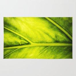green Rug