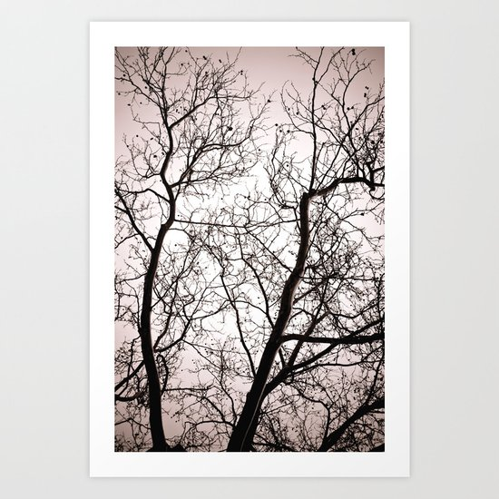 Branches in Winter Art Print
