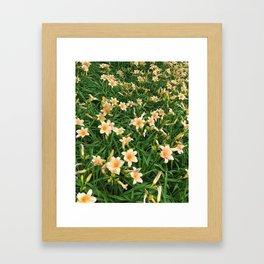 Lily Fields Framed Art Print