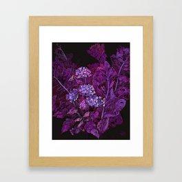 Hydrangea and Horseradish, Black & Purple Framed Art Print