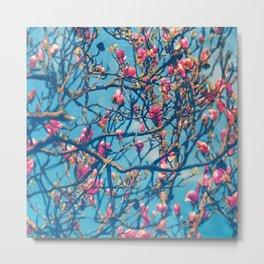 Spectacular Pink Grace: Oriental Magnolia Metal Print