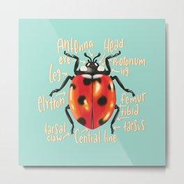 Ladybug scientific anatomy illustration Metal Print