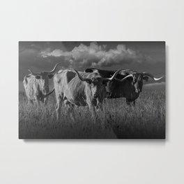 Texas Longhorn Steers under a Cloudy Sky in Black & White Metal Print