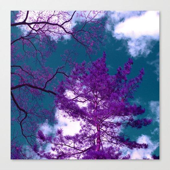 purple fir-tree II Canvas Print