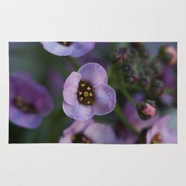Lavender Alyssum Rug