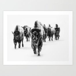 Bisons, black and white Art Print