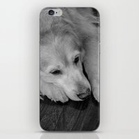 golden retriever iPhone & iPod Skins featuring Golden retriever by Mauricio Togawa