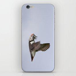 Puffin with Sand Eels in Beak iPhone Skin