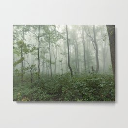 Smoky Mountain Summer Forest - National Park Nature Photography Metal Print