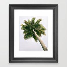 Foggy Palm Tree Framed Art Print